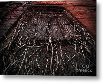 Vine Of Decay 1 Metal Print by Amy Cicconi