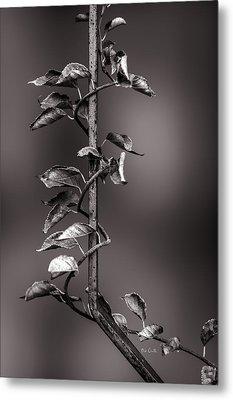 Vine On Iron Metal Print by Bob Orsillo