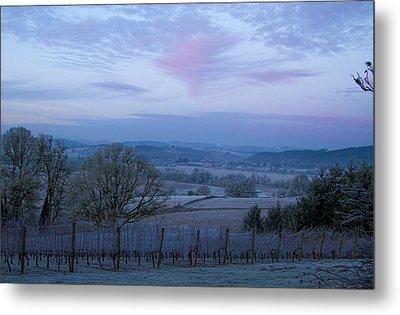 Vineyard Morning Light Metal Print by Jean Noren