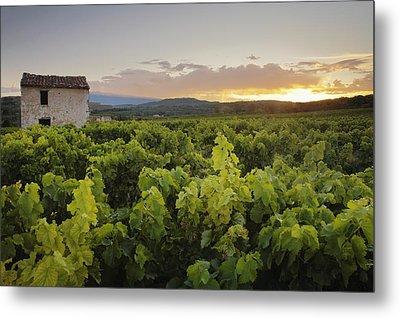 Vineyard Near Malemort-du-comtat Metal Print by Andy Kerry