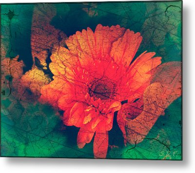 Vintage Aster Metal Print by Sherry Flaker