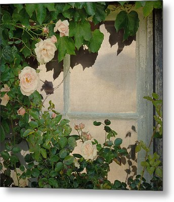 Vintage Rose Metal Print by Sally Banfill