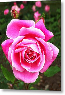 Wake Up And Smell The Roses Metal Print