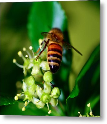 Wasp On Flower Metal Print by Tommytechno Sweden