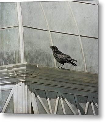 Watching Metal Print by Sally Banfill