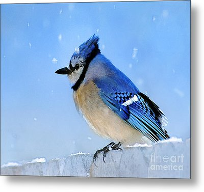 Watching The Snow Metal Print by Betty LaRue
