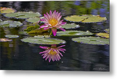 Water Lily Reflection Metal Print by Kathy Ponce