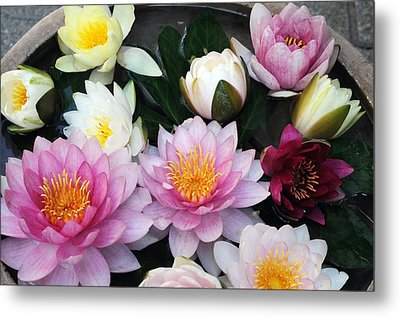 Metal Print featuring the photograph Water Lily Series -2  by Haleh Mahbod