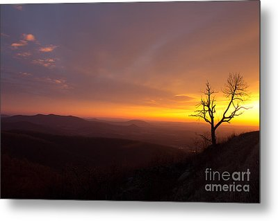 Way Of The Morning Metal Print
