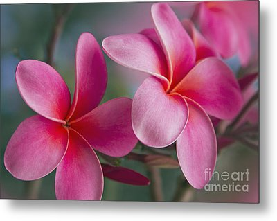 Metal Print featuring the photograph We Were Together . . .  by Sharon Mau