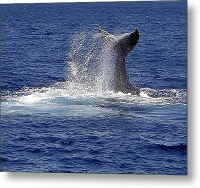 Metal Print featuring the photograph Whale Tale Splash by Penny Lisowski