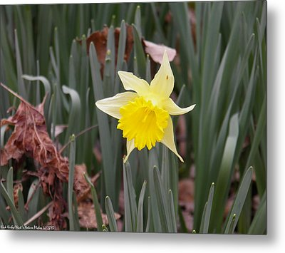 Metal Print featuring the photograph Whats Up Buttercup by Nick Kirby