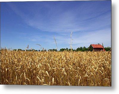 Wheat Field II Metal Print by Beth Vincent
