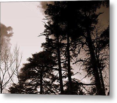 Whispering Trees Metal Print by Salman Ravish