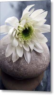 White Blossom On Rocks Metal Print by Linda Woods