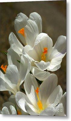 White Flowers Metal Print by Nur Roy