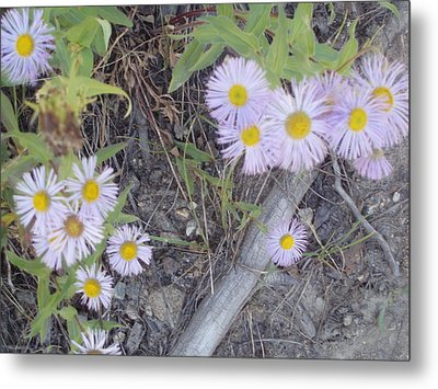 Metal Print featuring the photograph White In The Wild by Fortunate Findings Shirley Dickerson
