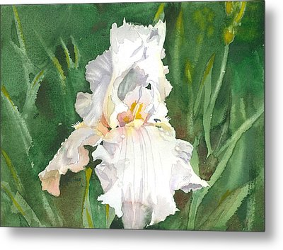 White Iris Metal Print by Spencer Meagher