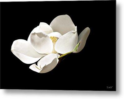 White Magnolia  Metal Print by Debra Forand
