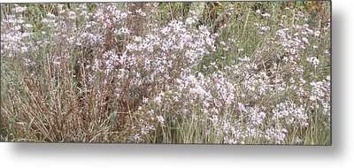 Metal Print featuring the photograph White Wild Flowers by Fortunate Findings Shirley Dickerson