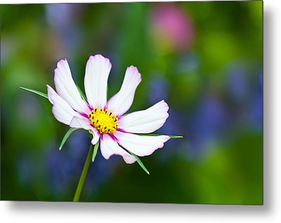 White Wildflower Metal Print by Joan Herwig