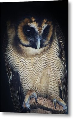 Who Gives A Hoot Metal Print by Paulette Thomas