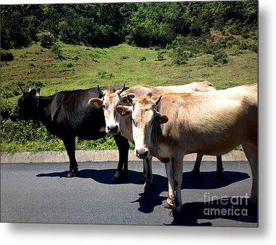 Who Moo? Metal Print by Hanza Turgul