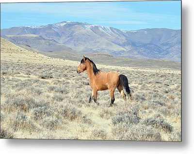 Wild Buckskin Metal Print by Lula Adams