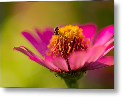 Metal Print featuring the photograph Wildflower - Bali by Matthew Onheiber
