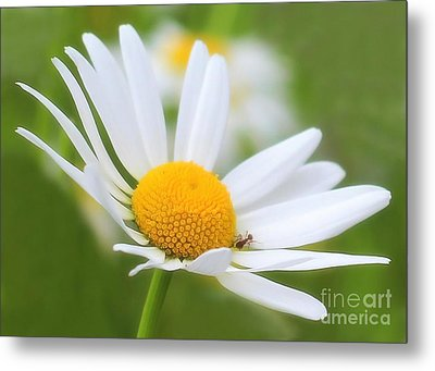Wildflower Metal Print by Sylvia  Niklasson