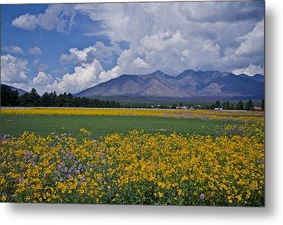 Wildflowers In Flag 9611 Metal Print