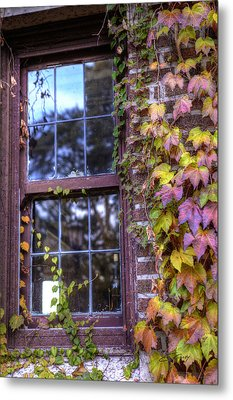 Window In Mayslake Ivy Metal Print