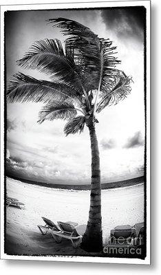 Windy Palm Metal Print by John Rizzuto