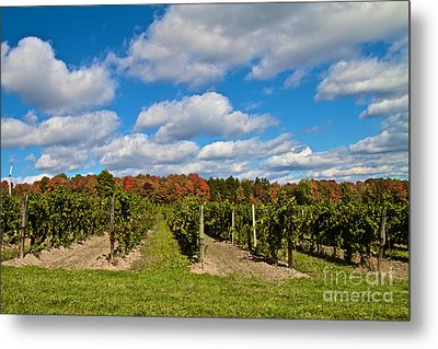 Wine In Waiting Metal Print by William Norton