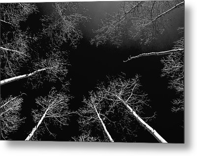 Metal Print featuring the photograph Winter Aspen  by Eric Rundle