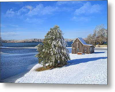 Winter At The Bog II Metal Print by Gina Cormier