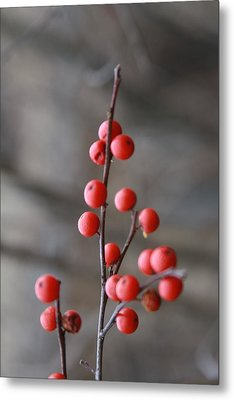 Winter Berries Metal Print by Vadim Levin
