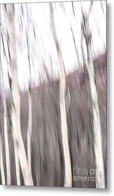 Winter Birches Tryptich 1 Metal Print