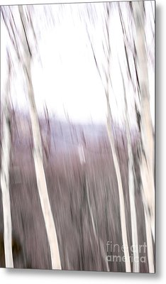 Winter Birches Tryptich 3 Metal Print by Susan Cole Kelly Impressions