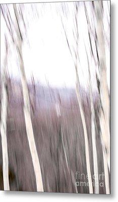 Winter Birches Tryptich 3 Metal Print