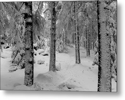 Winter Fairy Tale Forest Metal Print by Andreas Levi