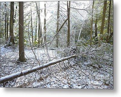 Winter Fallen Tree Metal Print by Thomas R Fletcher