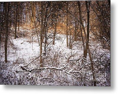 Winter Forest Metal Print by Elena Elisseeva