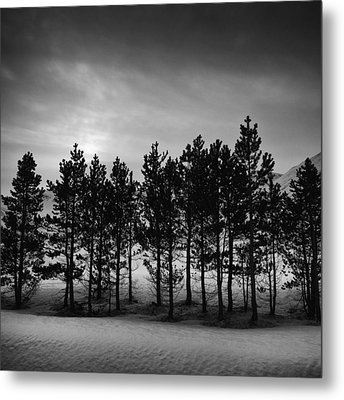 Winter Forest Metal Print by Frodi Brinks