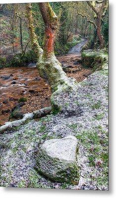 Winter In The Woods Metal Print by Adrian Evans