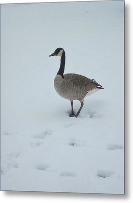 Winter In Their Cry Metal Print by Guy Ricketts