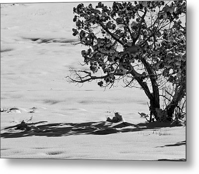Metal Print featuring the photograph Winter Juniper  by Eric Rundle