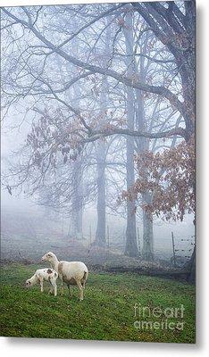 Winter Lambs And Ewe Foggy Day Metal Print by Thomas R Fletcher