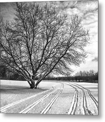 Winter Lines Metal Print by Lauri Novak