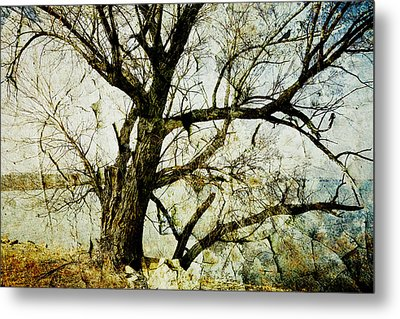 Winter Tree At The  Lake Shore  Metal Print by Ann Powell